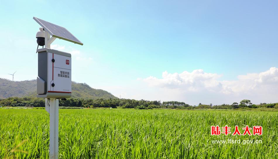 桥冲镇溪碧村艾米智能农田-950